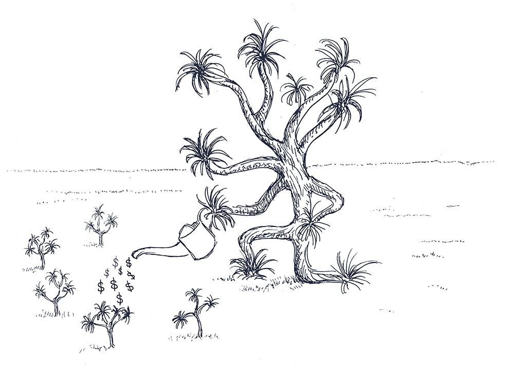 Joshua Tree Watering Seedlings